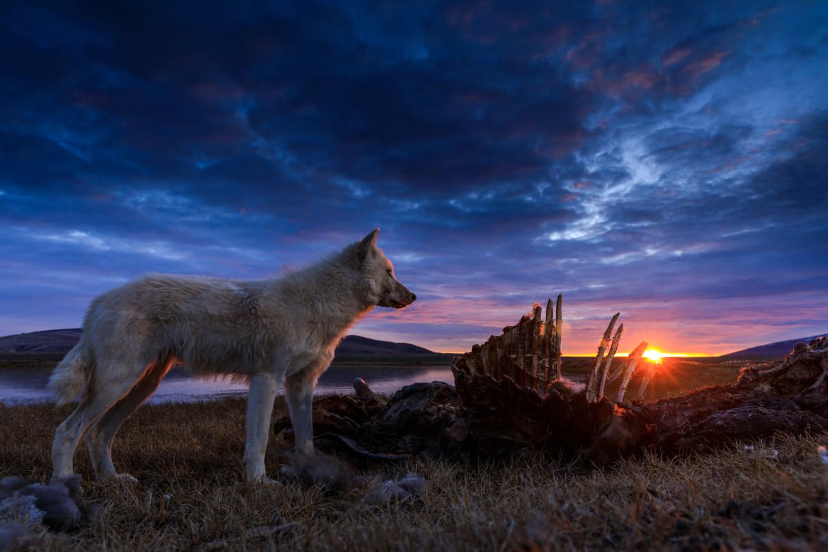 When Does Kingdom of the White Wolf Season 2 Start? Nat Geo